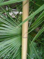 Bamfaux = imitation bamboo and/or colored bamboo